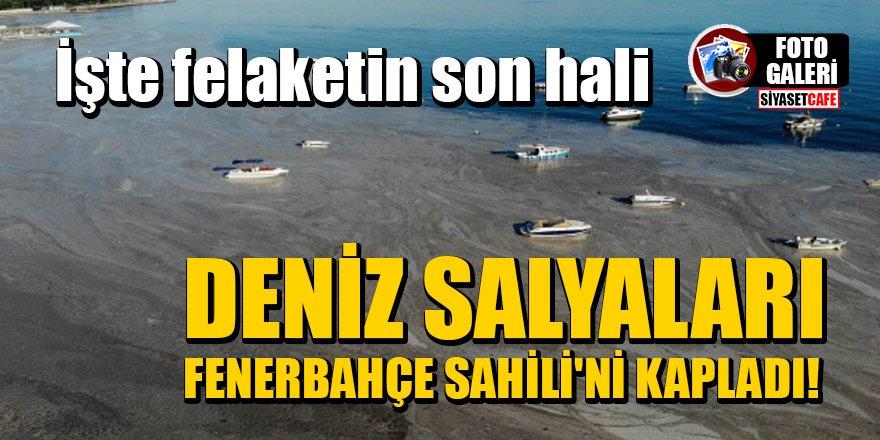 Deniz salyaları Fenerbahçe Sahili'ni kapladı!