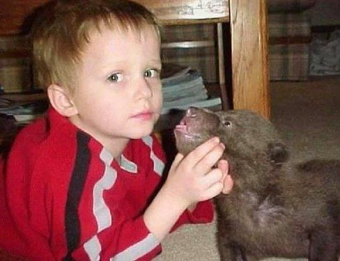 Alaska'da  2 ayı yavrusu yetiştirdi 1