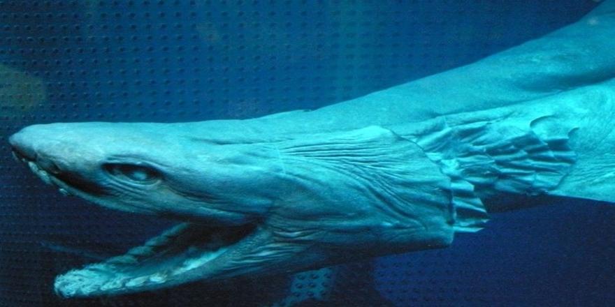 80 milyon sene sonra yaşayan canlı fosil bulundu 3
