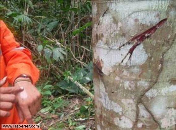 Kan Ağlayan Ağaç 5