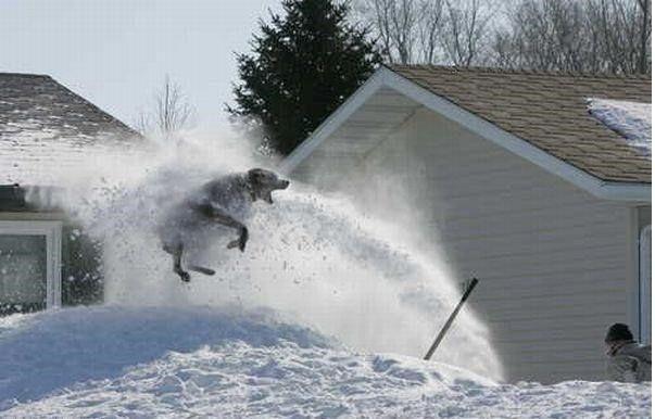 En komik kış fotoğrafları 5