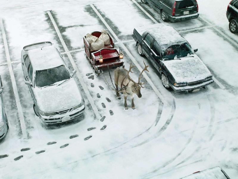 En komik kış fotoğrafları 6