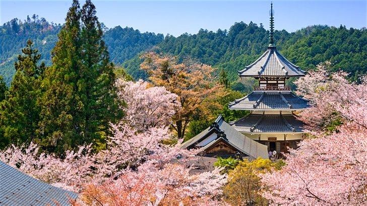 Sakura Sevenlerin Buluşma Noktaları Nereleri? 1