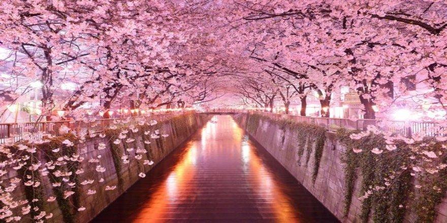 Sakura Sevenlerin Buluşma Noktaları Nereleri?