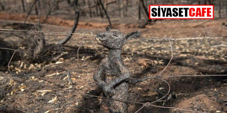 Avustralya'daki yangın görüntüleri hafızalardan yıllarca çıkmayacak