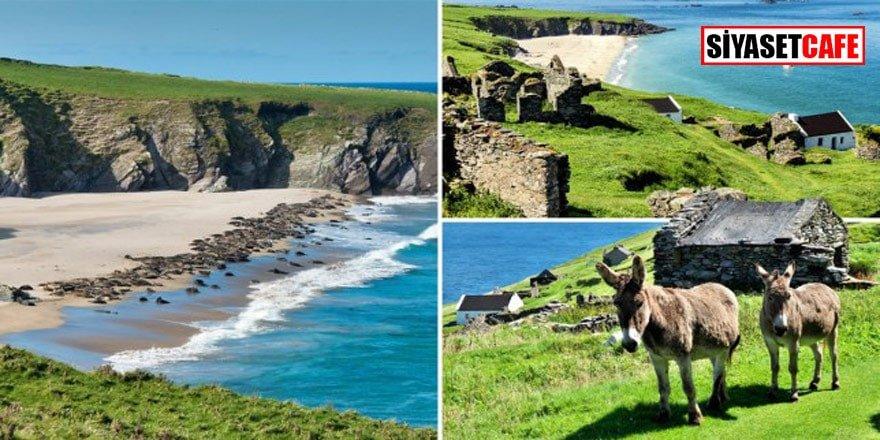 İrlanda'daki bu adada çalışacak her ülkeden personel aranıyor