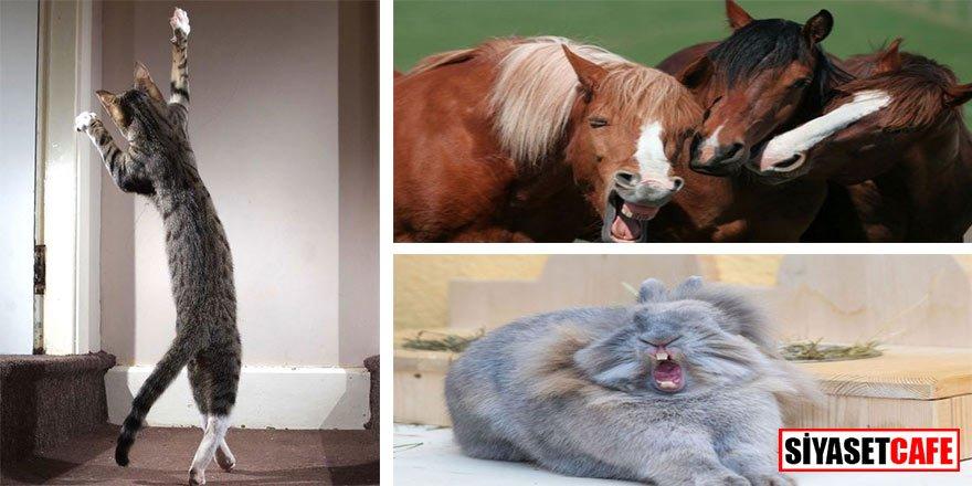 İşte Komik Evcil Hayvanlar Fotoğraf Yarışması'nın 2020 finalistleri