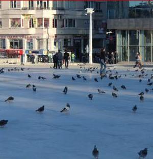 Taksim kavgasında kazanan kuşlar oldu