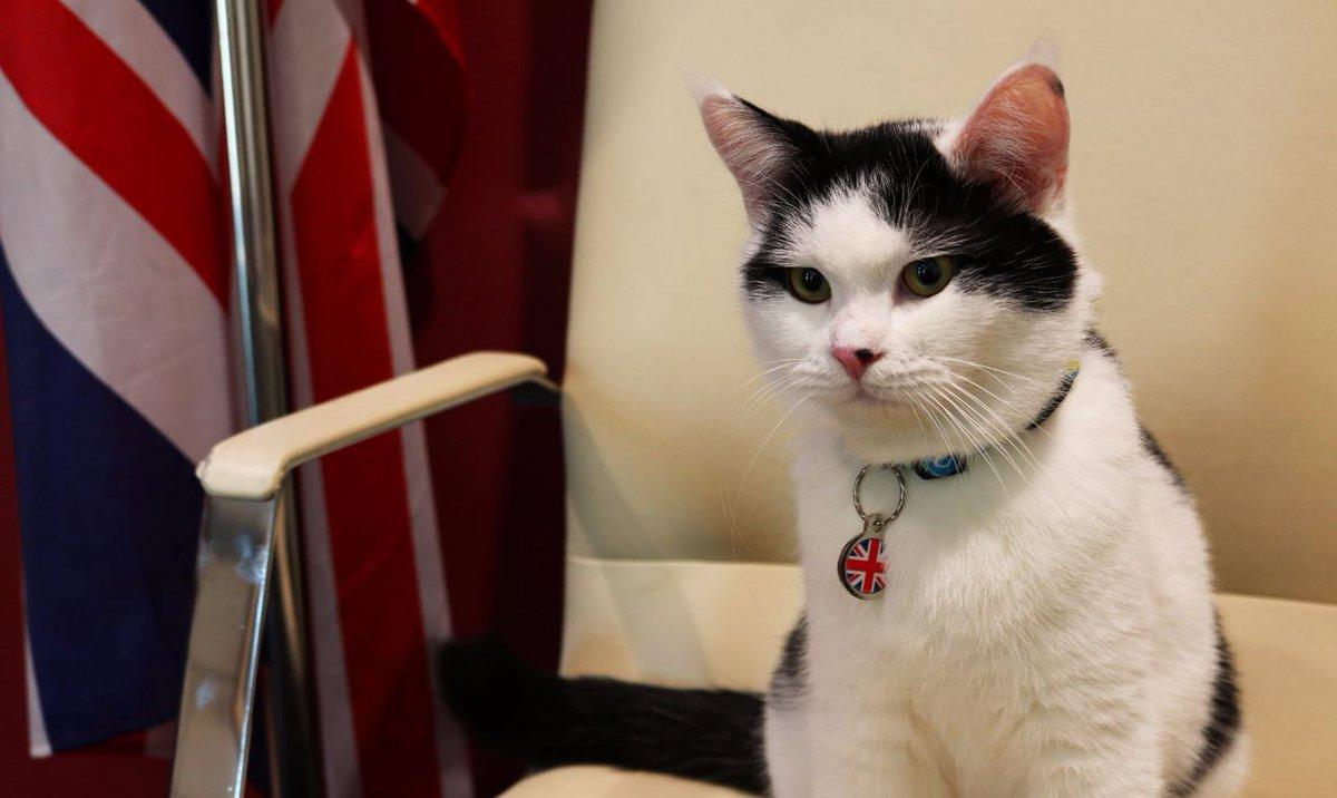 Bizde kediler trafolara girer İngiltere ise diplomat atadı