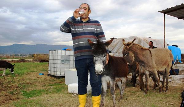 Eşek sütü şifa kaynağı oldu