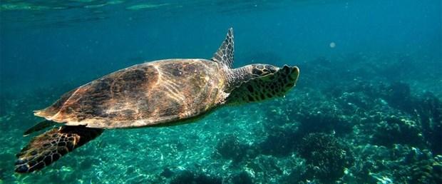 Kaplumbağa etinden zehirlenen 8 çocuk öldü