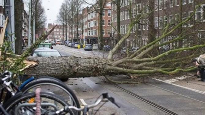 Almanya'da fırtına: 8 ölü