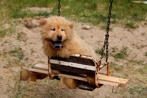 Kapıkule Gümrüğü köpekleri ihaleyle sattı!