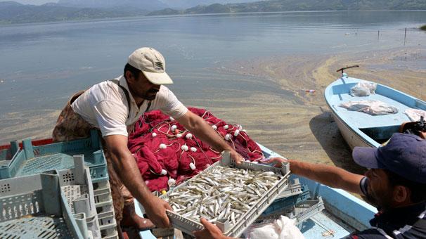 Osmaniye'den Avrupa'ya 300 Tonluk Dev Balık İhracatı