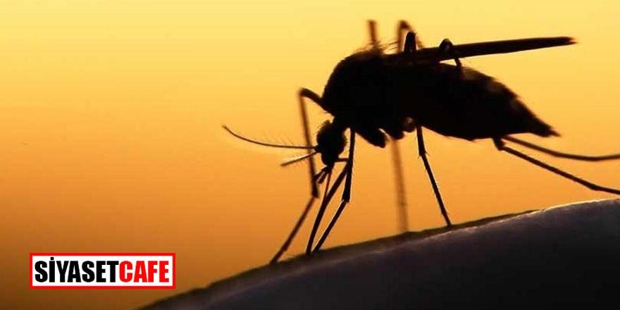 Sivrisineklerin şehre girişi yasaklandı