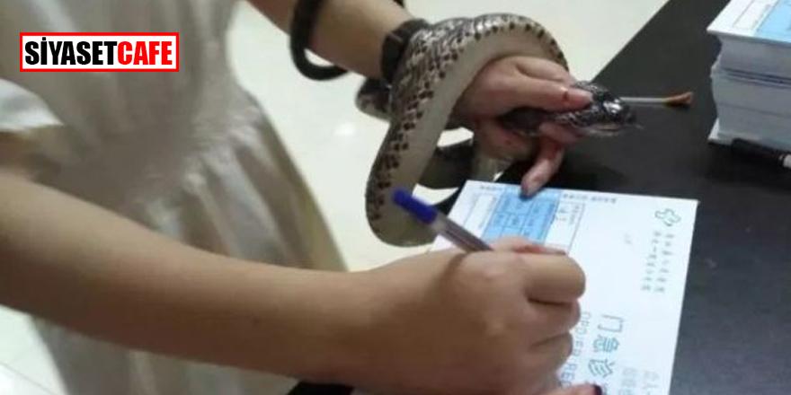 Kendisini sokan yılanı hastaneye götürdü!