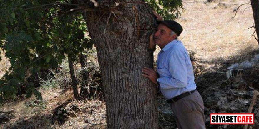 Ağaçtan çıkan mucize bal! Her derde deva