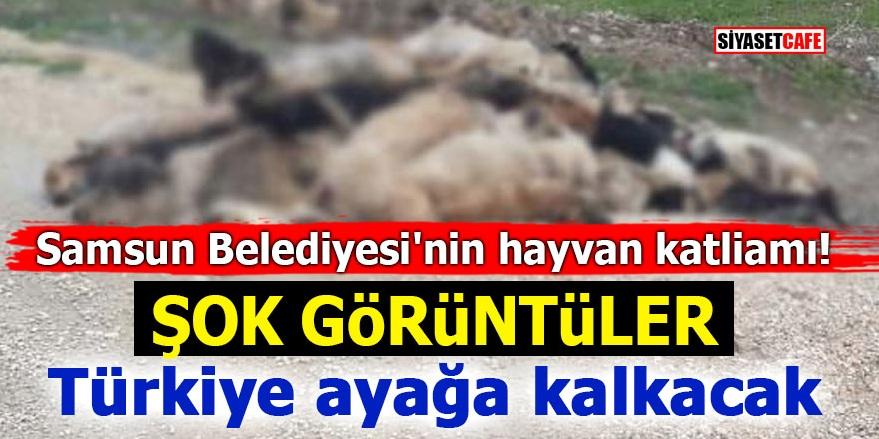 Samsun Belediyesi'nin hayvan katliamı! ŞOK GÖRÜNTÜLER! Türkiye ayağa kalkacak