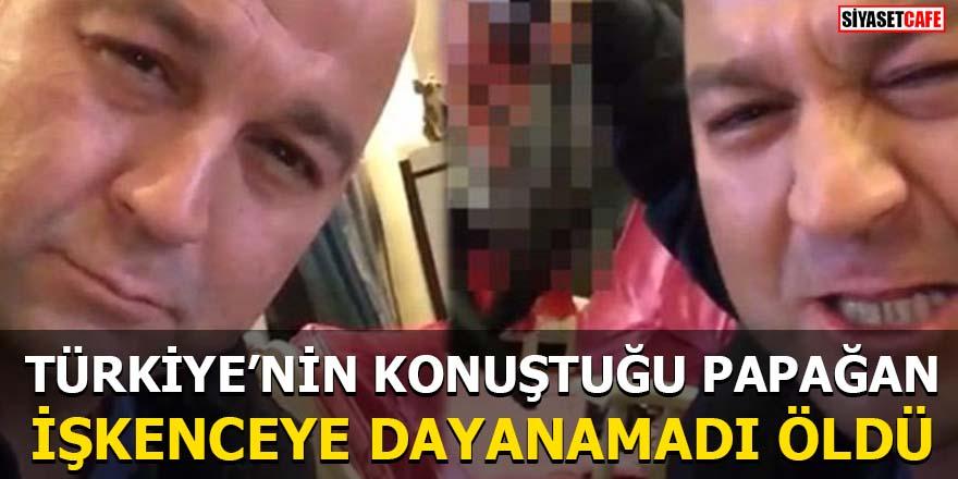 Türkiye'nin konuştuğu papağan işkenceye dayanamadı öldü