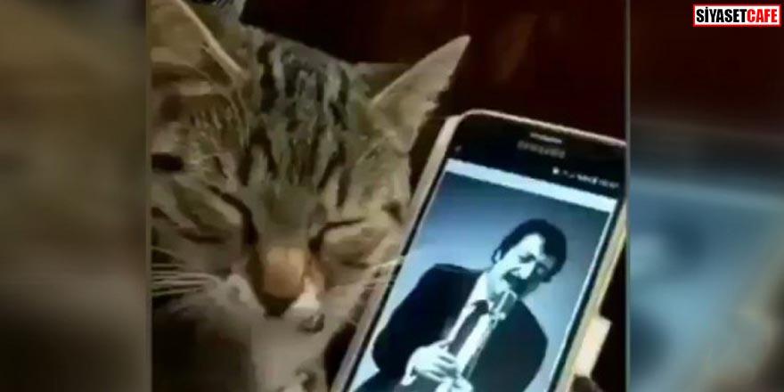 Müslüm Gürses dinleyen kedinin tepkisi şaşırttı