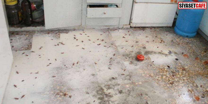 Hijyenik zannettiğimiz evlerimiz aslında böcek yuvası!