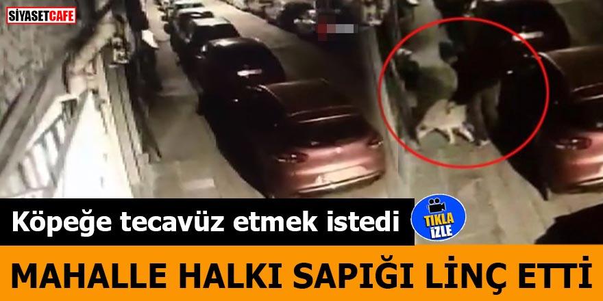 Köpeğe tecavüz etmek istedi Mahalle halkı sapığı linç etti
