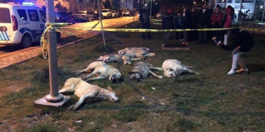Ankara'da köpekleri zehirleyen 3 kişi gözaltına alındı