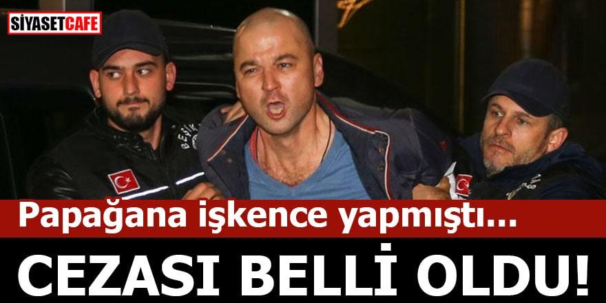 Papağana işkence yapan Murat Özdemir'in cezası belli oldu