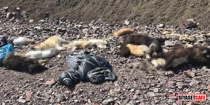 Batıkent'te yaşanan vahşetin ardından Çubuk İlçesi'nde köpek katliamı