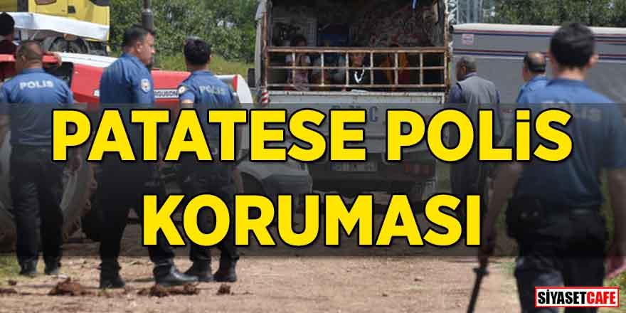 Patatese polis koruması