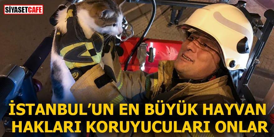 İstanbul'un en büyük hayvan hakları koruyucuları onlar