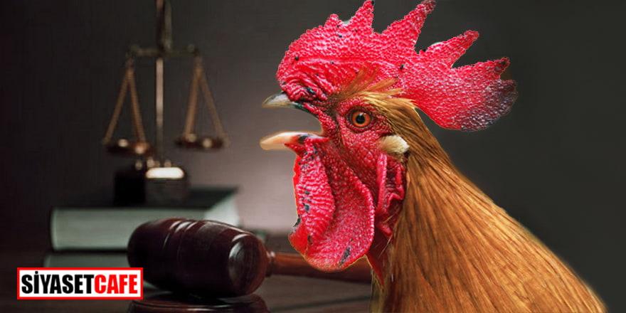 Fransa'da dava edilen horozun ilk duruşması görüldü