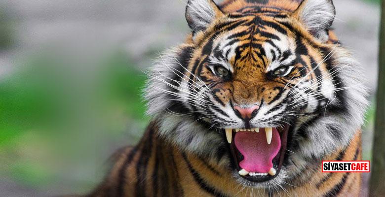 Korku filmi gibi... Hindistan'ı sel vurdu, vahşi hayvanlar firar etti!
