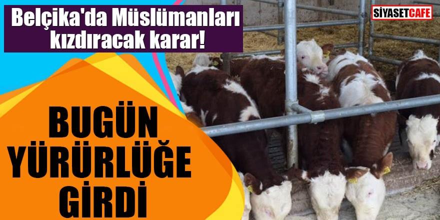 Belçika'da Müslümanları kızdıracak karar! Bugün yürürlüğe girdi