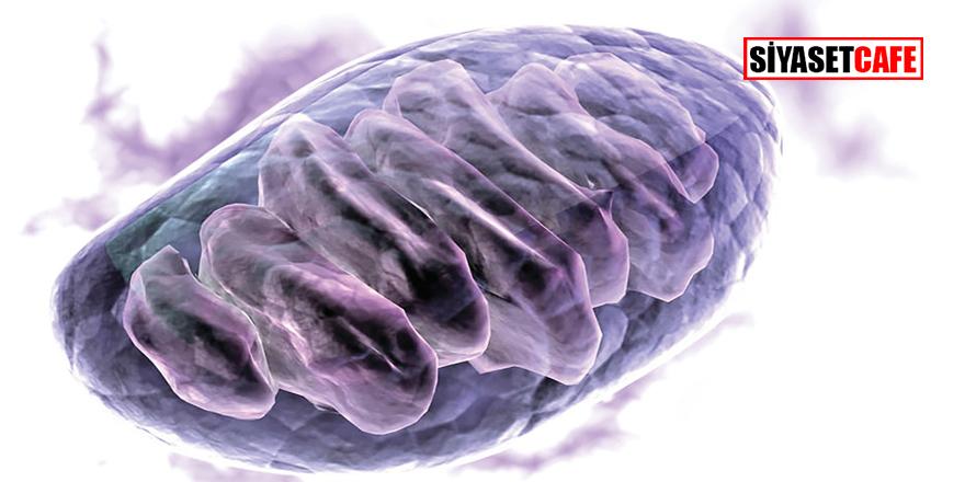 Mitokondri nakli ne demektir? Mitokondri nakli ile tüp bebek tedavisi nasıl olur?