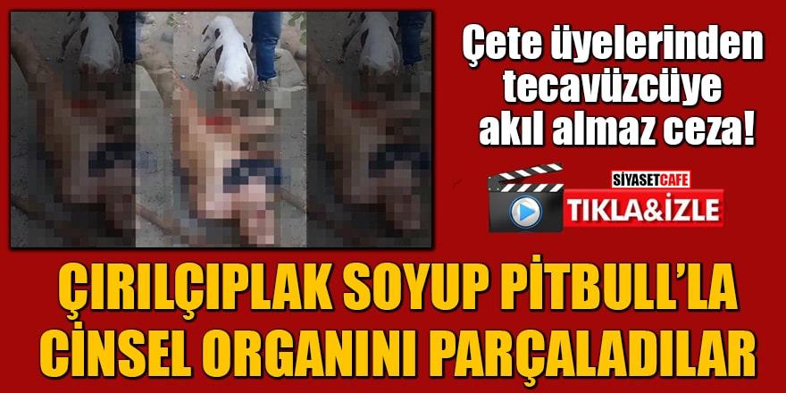 Tecavüzcüyü çırılçıplak soyup pitbull'la cinsel organını parçaladılar