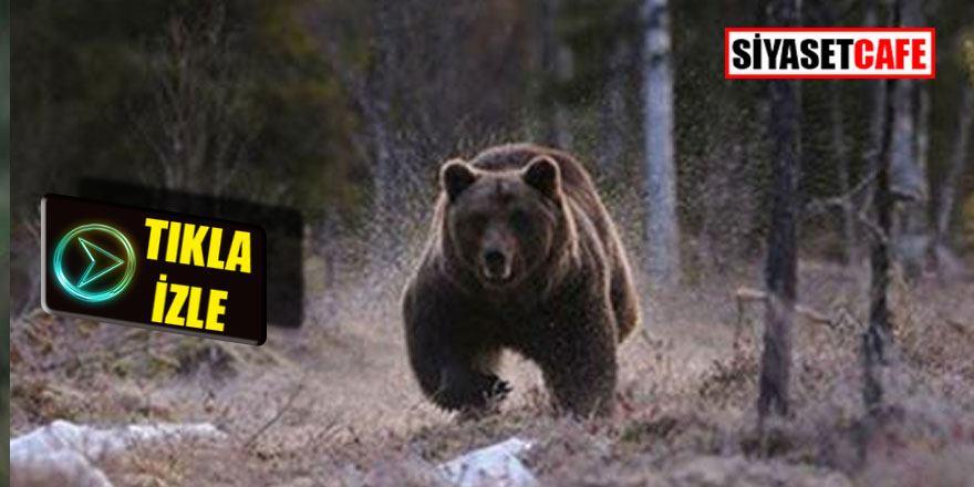 Evinde ayı saldırısına uğradı; 1 ölü 2 yaralı