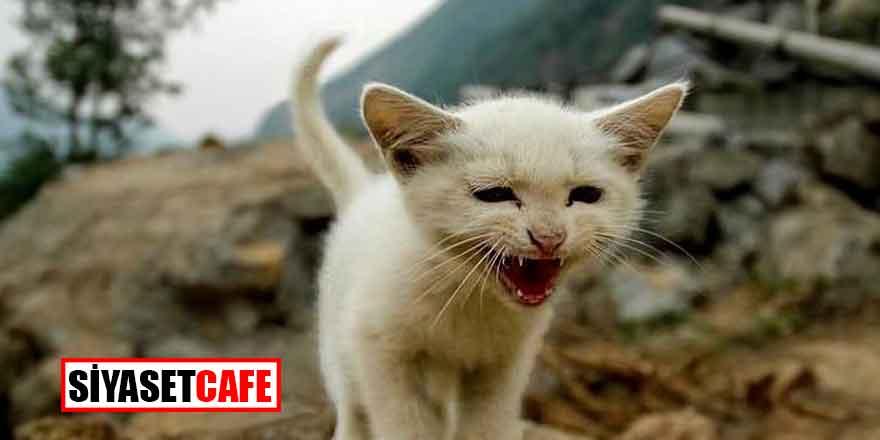 Hayvanlar depremi haber veriyor
