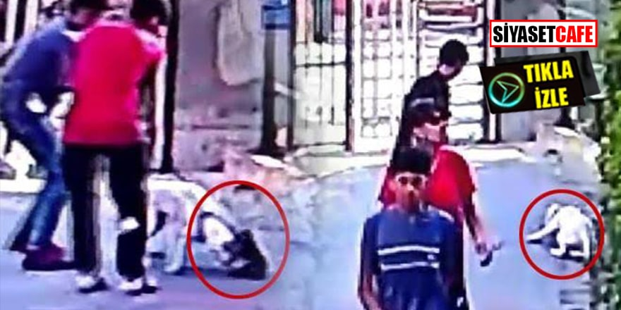 İstanbul'da pitbull dehşeti! 7 yaşındaki çocuk hastanelik oldu