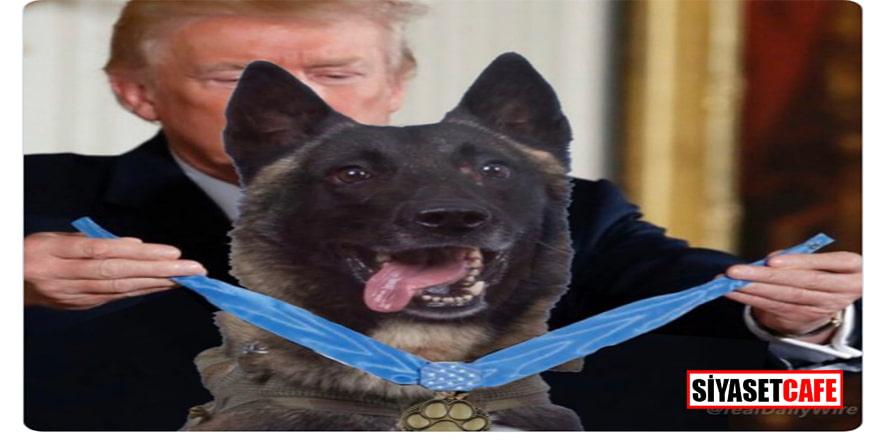 Trump'tan 'ABD'nin kahramanı' köpeğe madalya