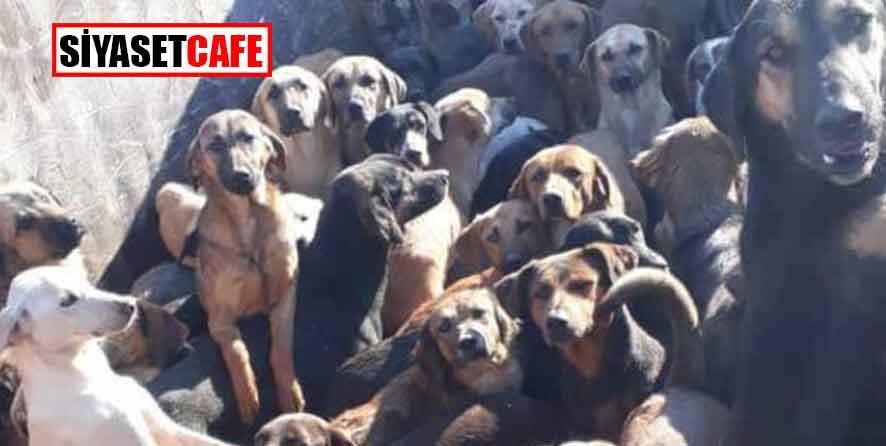 70 köpeği istifleyip çaresizce bırakacaklardı ki...