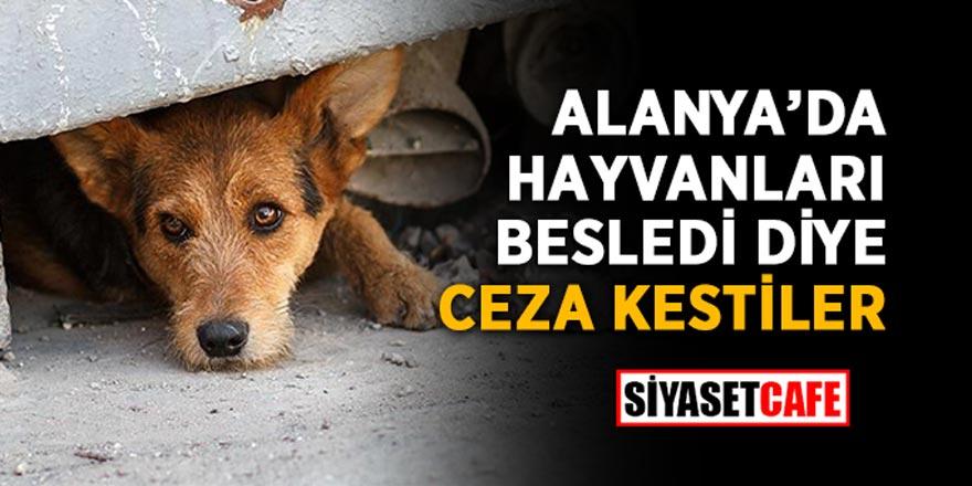 Hayvanları beslediği için Alanya'da bir vatandaş ceza yedi