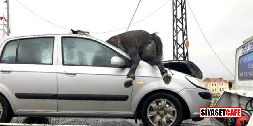 İstanbul'da başıboş at, aracın ön camından içeri girdi