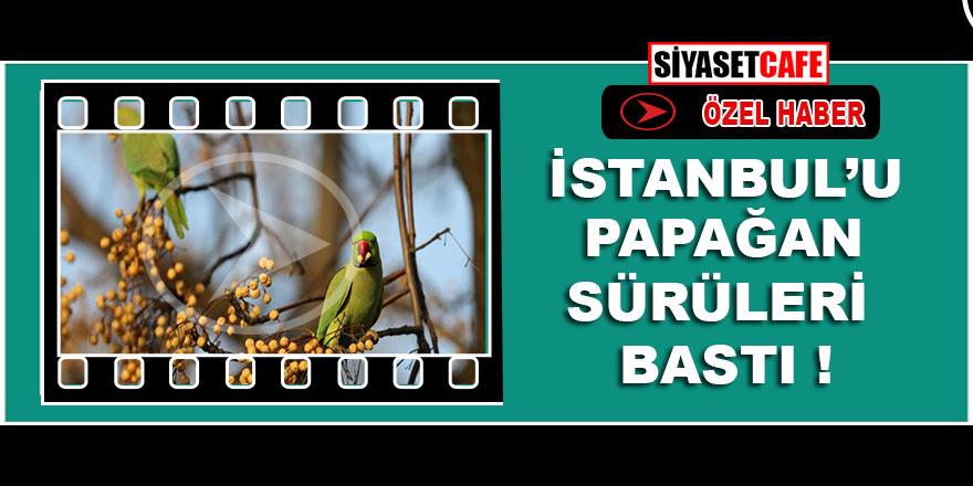 Karantina altındaki İstanbul'da Papağan sürüleri gözükmeye başladı