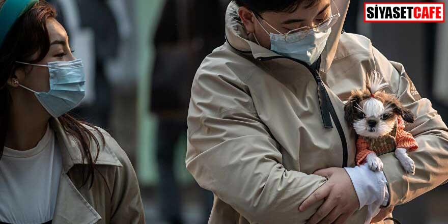 Çin'den flaş köpek kararı! Besi hayvanı yerine evcil hayvan olarak sınıflandırılacaklar