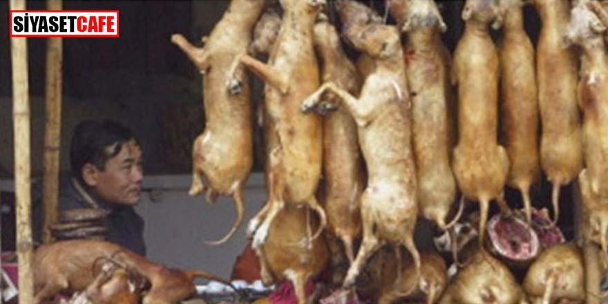 Çin'den radikal karar! Kedi ve köpekler çiftlik hayvanı statüsünden çıkarılıyor