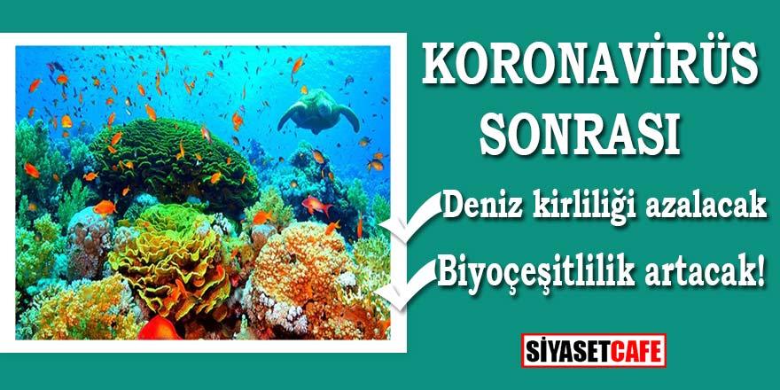 Korona virüs sonrası denizlerle kirlilik azalacak, biyoçeşitlilik artacak