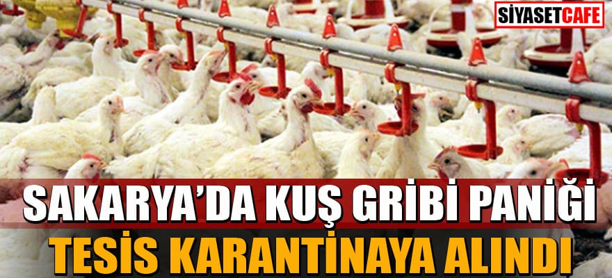 Sakarya'da kuş gribi şüphesi! 700 bin tavuk telef oldu...