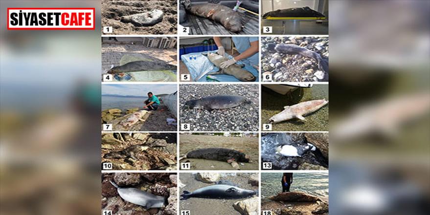 Akdeniz foklarını koruma çağrısı