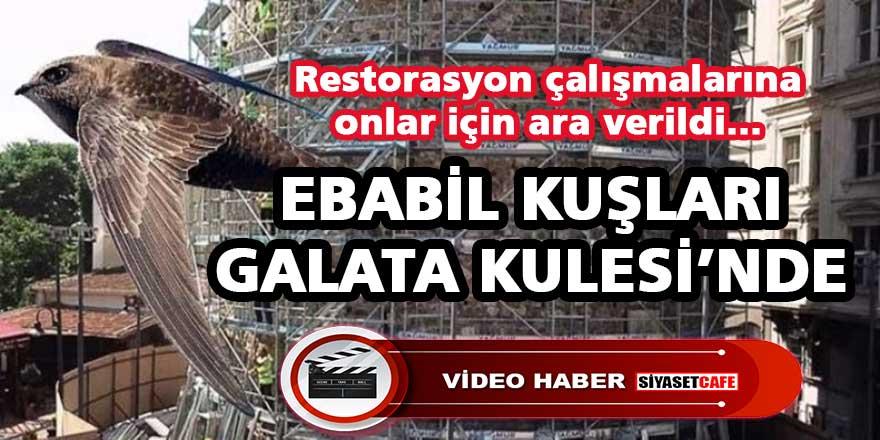 Ebabil Kuşları bu kez Galata Kulesi'nde görüntülendi, restorasyon çalışmalarına ara verildi